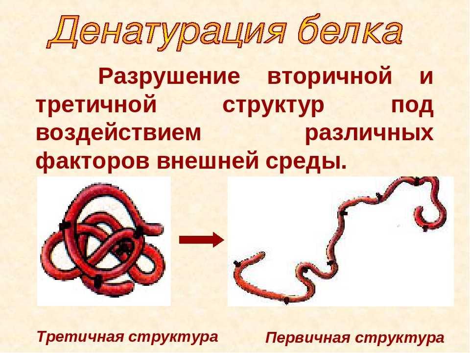 денатурацию белка