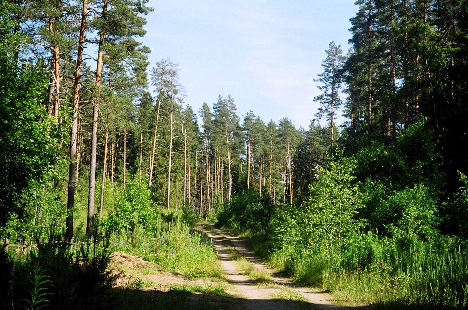 леса - О поиске металлолома в лесах